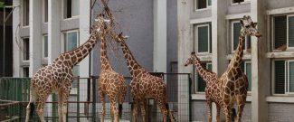 Шанхайский зоопарк как добраться?